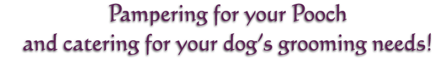 Pampering your pooch, and catering for your dog's grooming needs